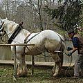 12 avril 2014 - Concours National de <b>Débardage</b> - Qualification loisir attelé- Cibeins (AIn)