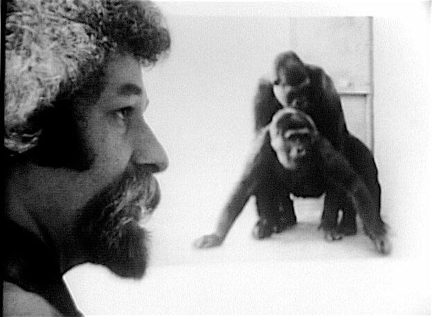 primate1a