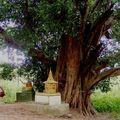 bel arbre au milieu de l'^ile
