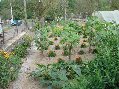 2008 08 04 Mon jardin