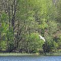 L'étang au