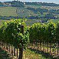 Viagem e vinho