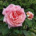 Roses du soir,