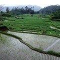 rizières 2