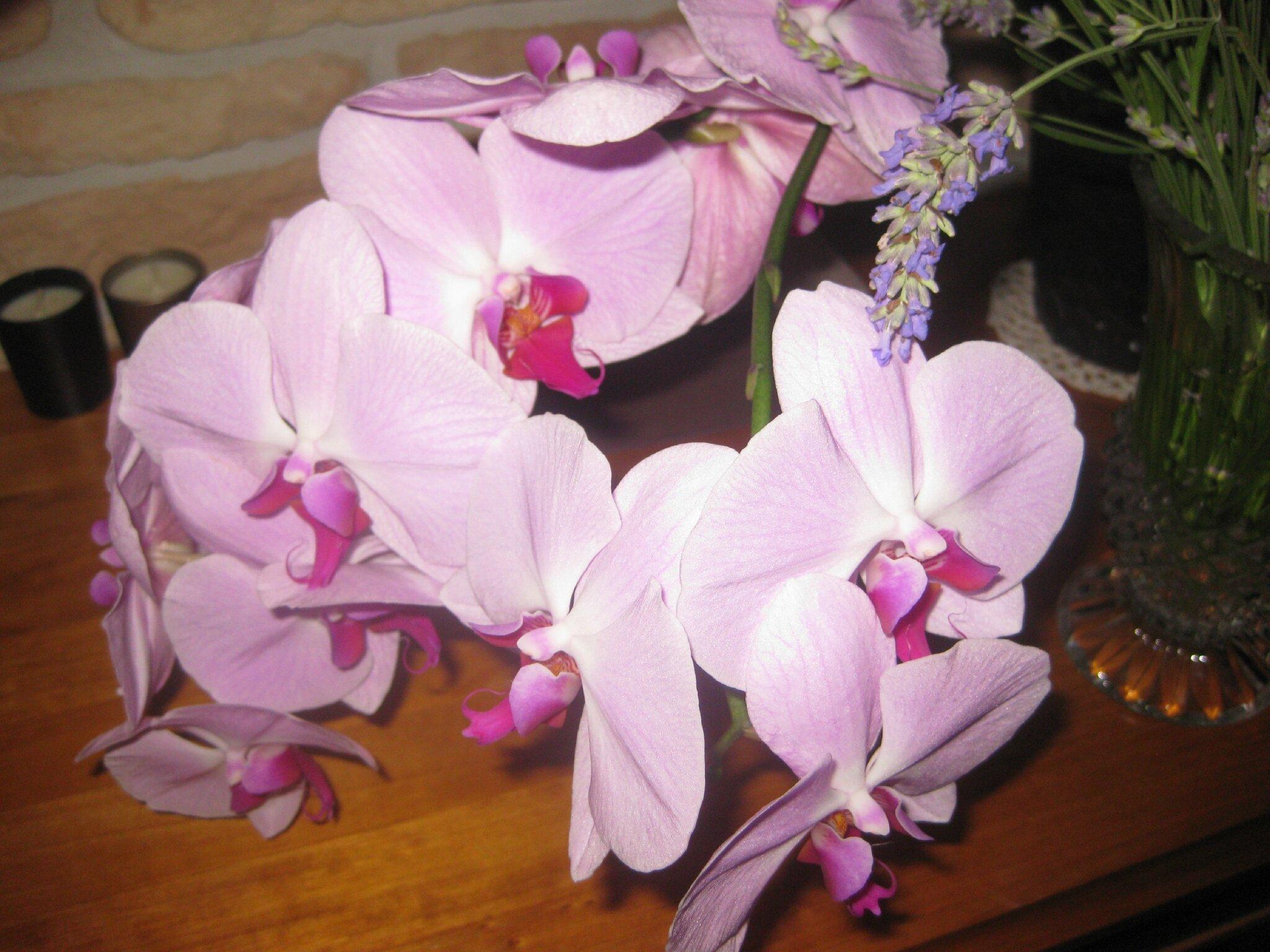 ORCHIDEE 46