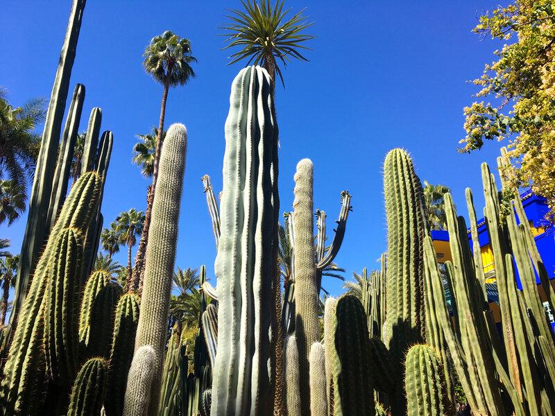 cactus - palmier