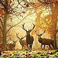 cerf automne