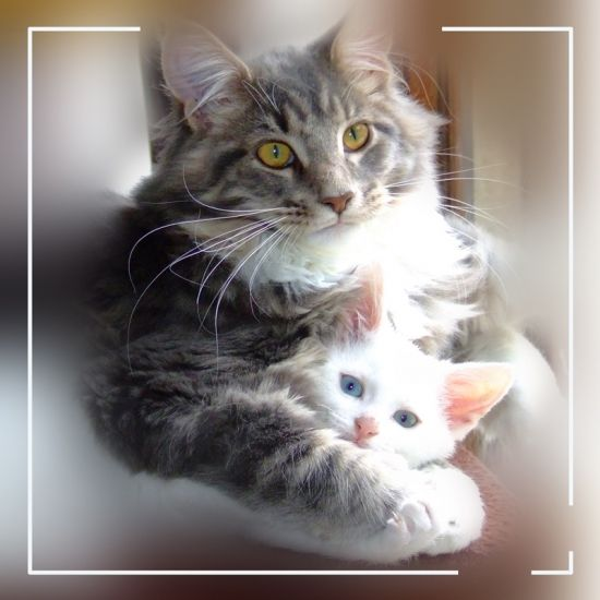 chatons-aulnay-sur-iton-france-1140040951-1114565[2]