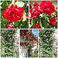 Jardin fin mai 2018 (8)