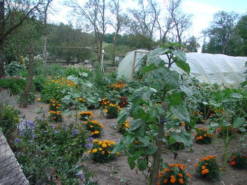 2008 08 10 Mon jardin