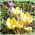 Le printemps est là !!!
