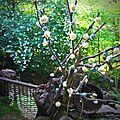 arbuste aux pompons
