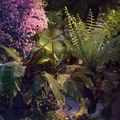 Floralies 162_r1