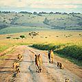 Le kenya, une destination en vogue sur le continent africain