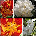 Fleurs mai 2013 (3)