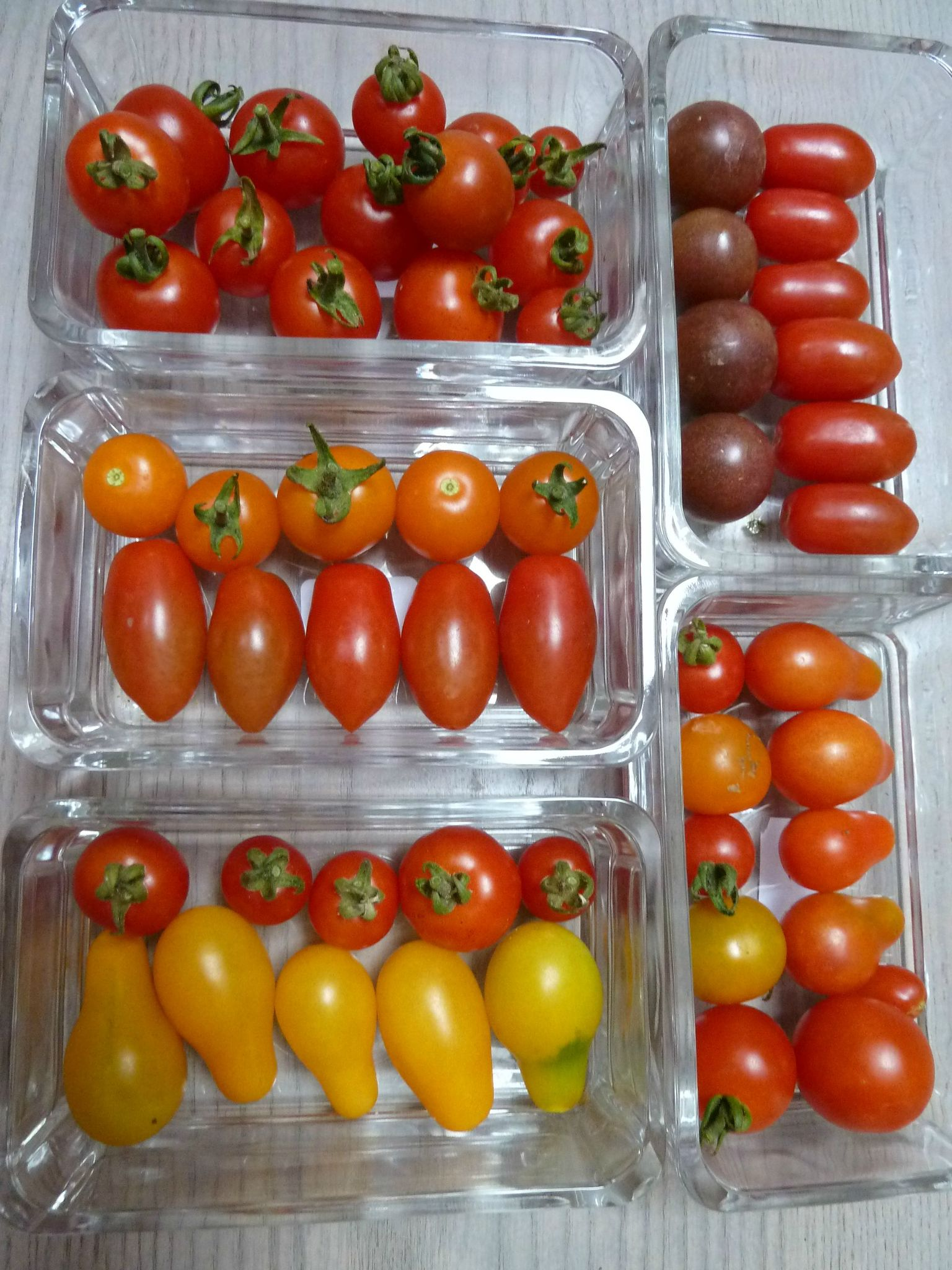 23-tomates cerises www.passionpotager.canalblog.com