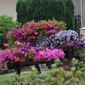 jardins fleuris 0230024