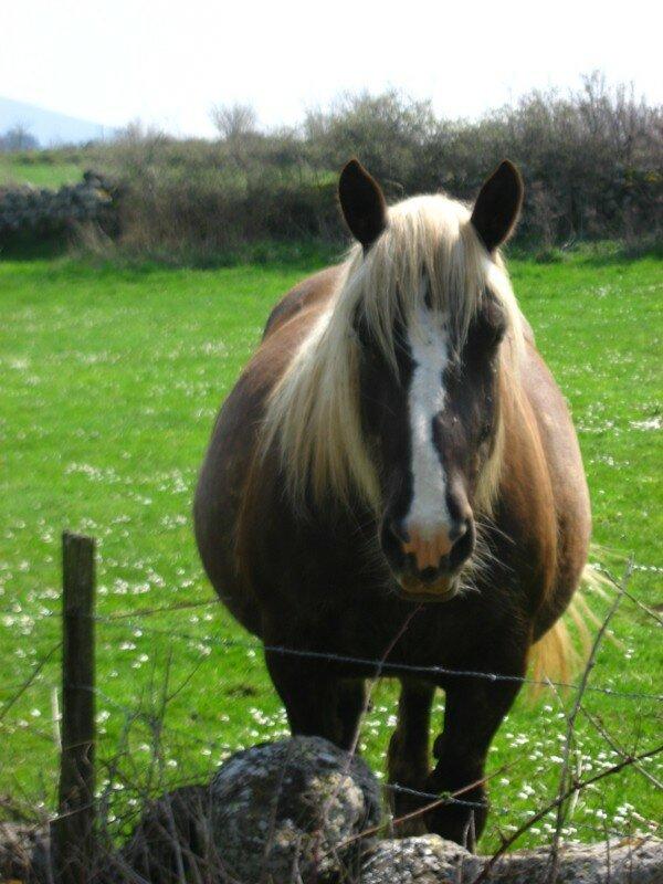 cheval pres de Bains 3