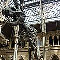 Oxford_MuseumOfNaturalHistory#4