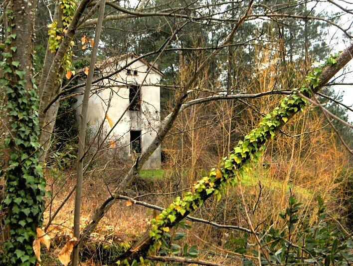 quelque part une cabane