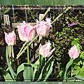 balanicole_2017_05_le printemps des tulipes_30_dallas