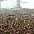 Boesou (1009m) dans le brouillard.