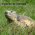 Marmotte (6)