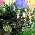 portillon de rêve yurtao