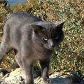 1 chat hérault