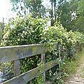 vlcsnap-2012-07-02-00h11m22s131