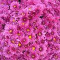 Parc Expo2010-Foli'Flore § bonsai (71)