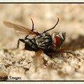 Le repas des fourmis