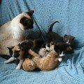 2008 04 13 Blanco et les chatons