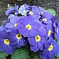 Petites fleurs dans la cour