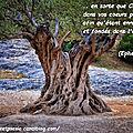 <b>Ephésiens</b> <b>3</b>:17 - Verset d'Or Pur (12 - 43)