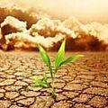 Les ogm, bientôt subventionnés au nom de la lutte contre le réchauffement ? -