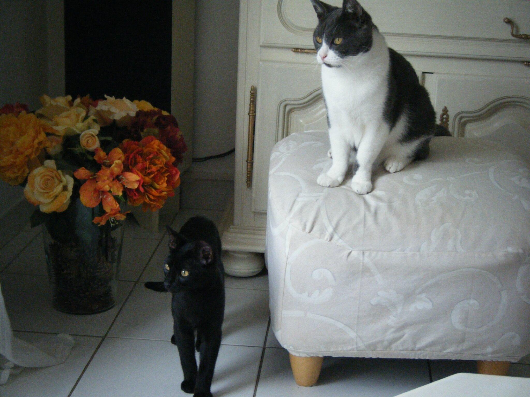Crispy et Sanka