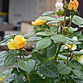 09/06/17 : Le jardin de Lavandine fin mai