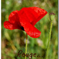 Rouge...