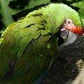 Parc des oiseaux : perroquet