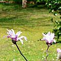 Fleurs de Léon et Chenilles 040317
