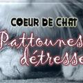 Bannière blog Coeur de chat
