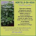 MENSAGEM DO DIA 15 DE ABRIL: HORTELÃ-DA-ÁGUA