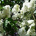 fleurs et jardin (14)