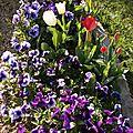 Une petite histoire pour pâques et les fleurs de mon jardin!