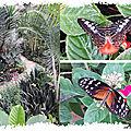cARTe animée : le papillon qui voulait butiner