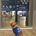 Oui aux chiens guide d'aveugle ou d'assistance