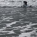 Les vagues : un phénomène complexe !