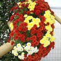 Parc Expo2010-Foli'Flore § bonsai (41)