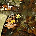 blog reflets automne